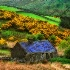 © Anne  Hickey PhotoID# 6509131: Irish Cottage